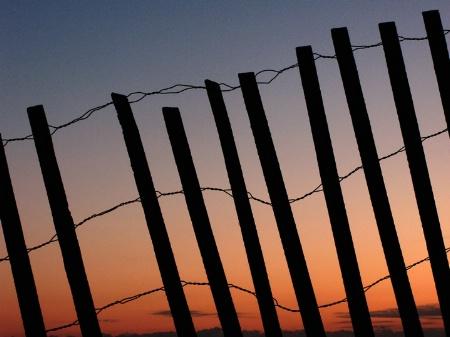 Sunrise-Snow Fence