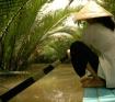 Into the Mekong