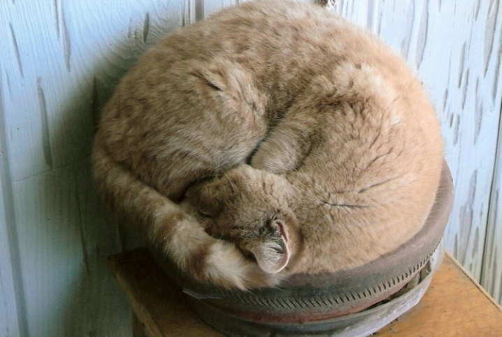 potted cat sleeping