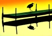 Heron on Lost Lak...