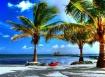 Kayak Under Palms