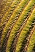 cactus_needles