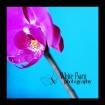 Moth Orchid ~*~4~...