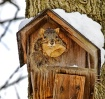 Tree House Guest