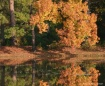 fall_at_the_pond