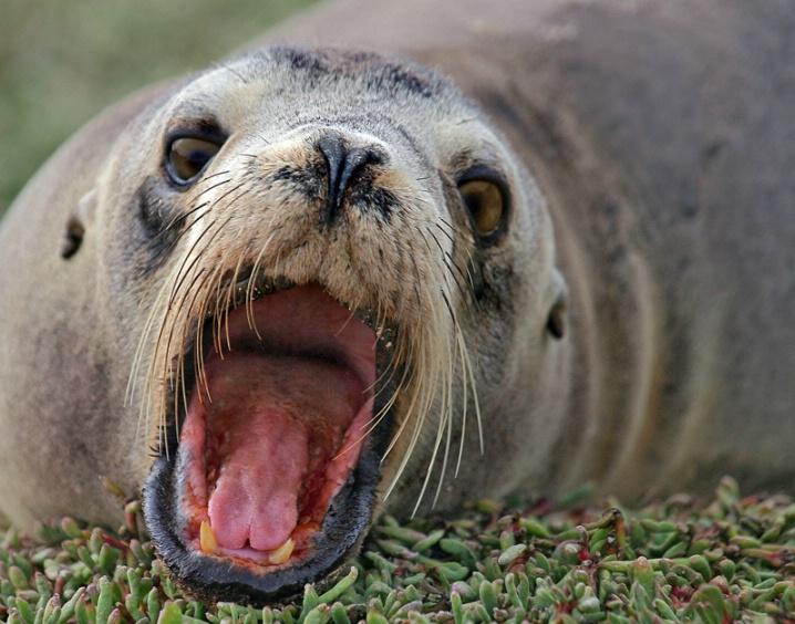 Big Mouth - ID: 5635401 © Kathy Reeves