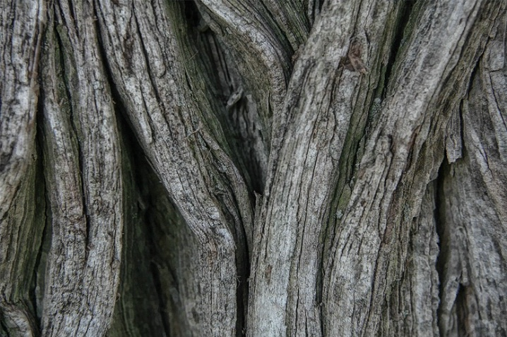 Weathered Tree Trunk