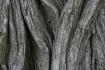 Weathered Tree Tr...