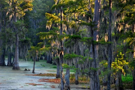 A Louisiana Bayou Dedicated To Herbert Keppler