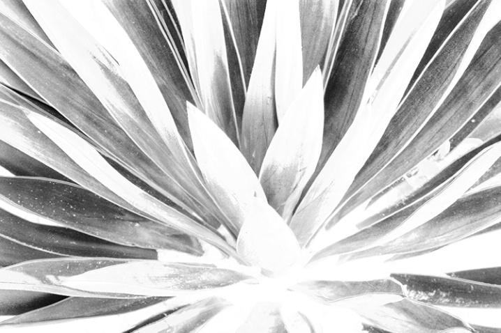Plant - St. Simons Island 8-5-07 - ID: 5660090 © Robert A. Burns