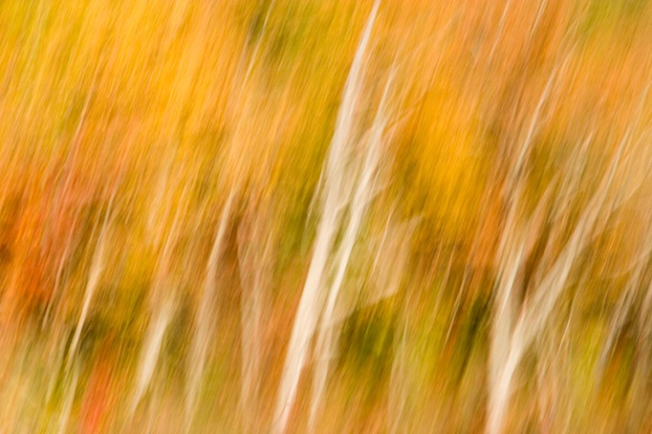 Tree Impression #1 Chattanooga 11-10-07 - ID: 5660300 © Robert A. Burns