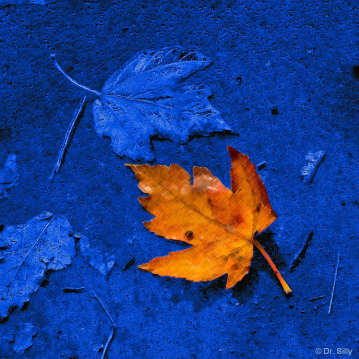 Orange on Blue