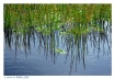 Water Scene (FINA...