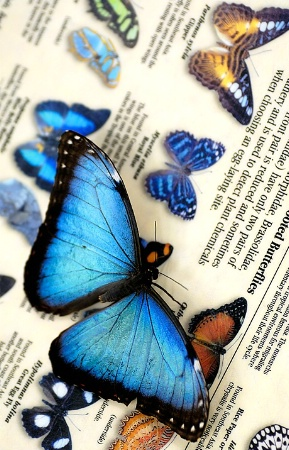 Butterfly Facts