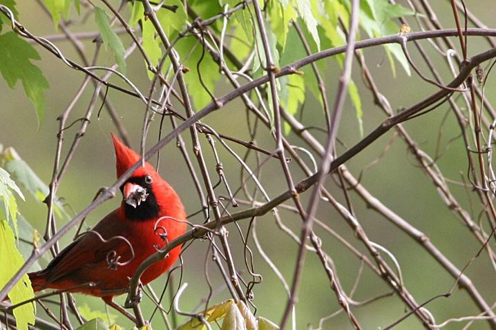 Final Score--Cardinals 1 Spiders 0