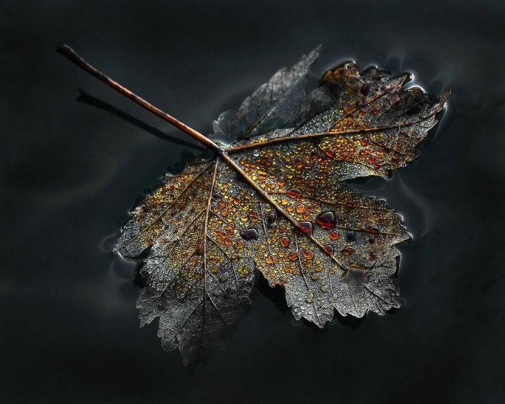 Autumn Ethereal_ Part II