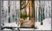 Diverse woodlands