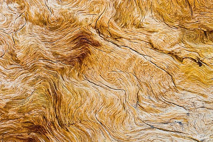 bristlecone-detail_1634 - ID: 5707674 © Marilynn Mann
