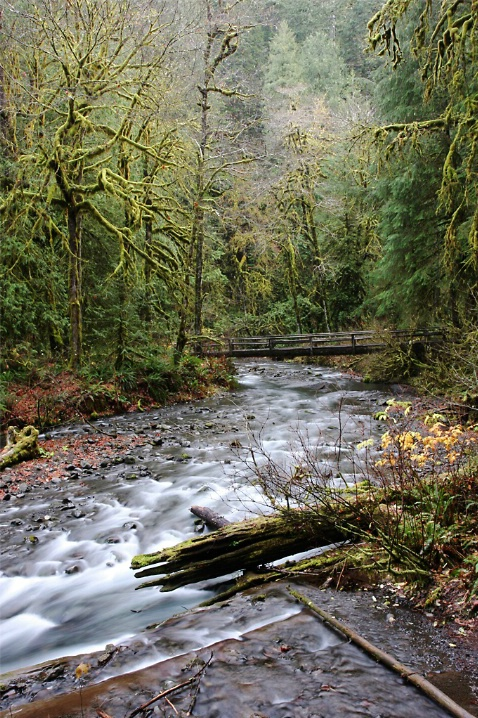 Barnes Creek, Olympic National Park, WA