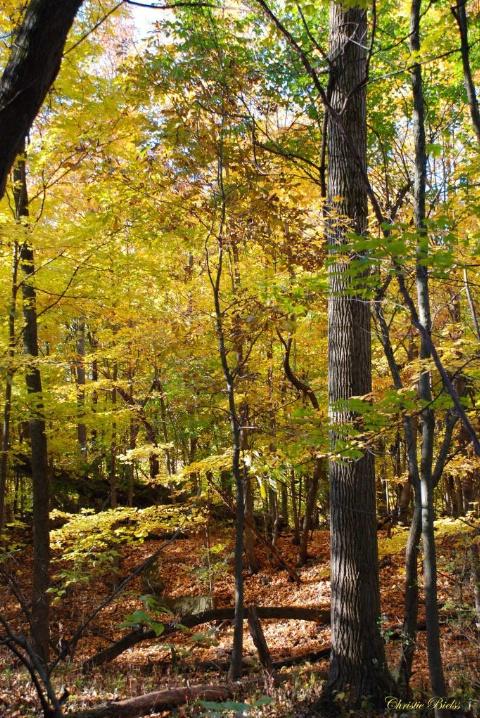 Fall Treasure