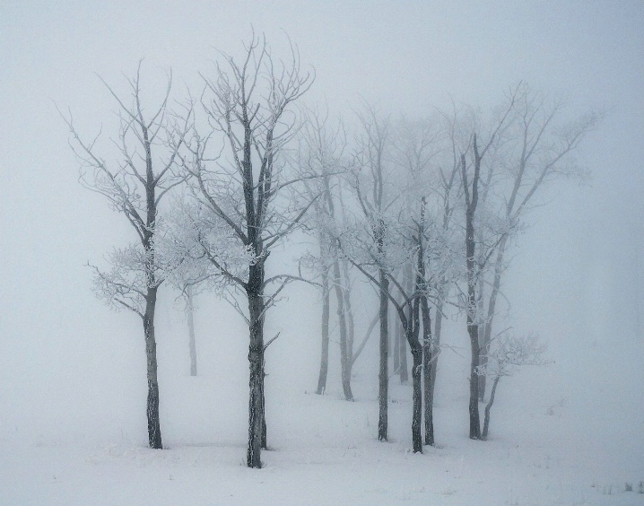 """""""Trees in the Mist"""" - ID: 5729293 © Kelly Pape"""