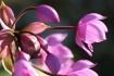 Macro Flowers 3