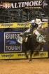 Baltimore Bull Ri...