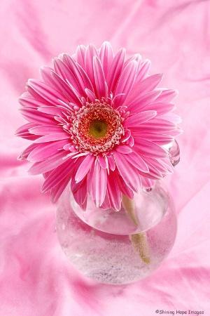 ~Pink Overload~