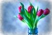 Sketching tulips
