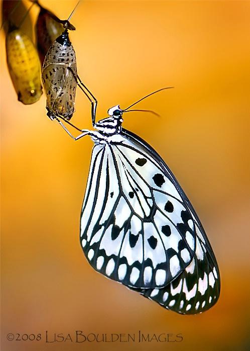 Butterfly's Birthday