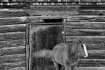 Horse # 421