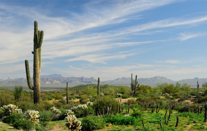 Desert Landscape - ID: 5746790 © Sherry Karr Adkins