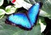 Pretty Blue Butte...