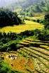 Rice Terrace Farm...
