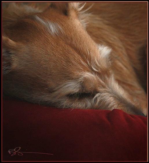 ~Let Sleeping Dogs Lie!~