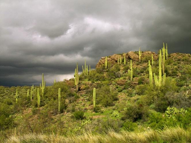 Just North of Phoenix - ID: 5752426 © Richard L. Smith
