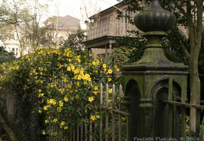 Yellow Jasmine by Audubon Park