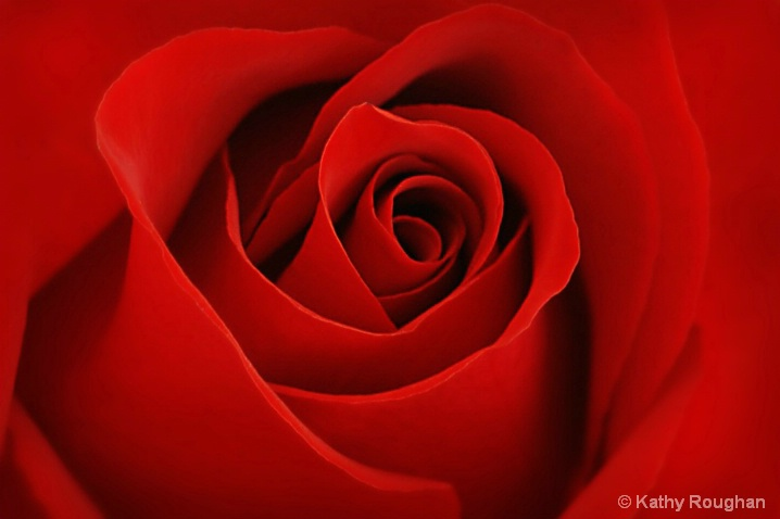 Red Rose - ID: 5765493 © Kathleen Roughan