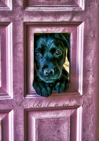Peek a Pup