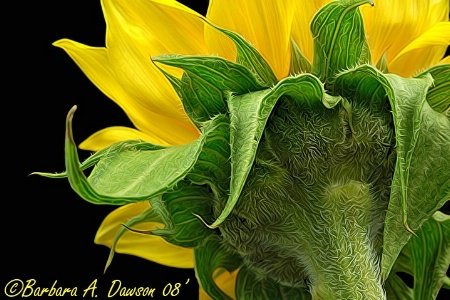 Detail of a Sunflower - second place win