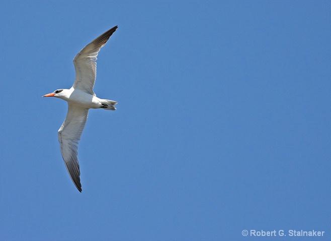 Tern Turning