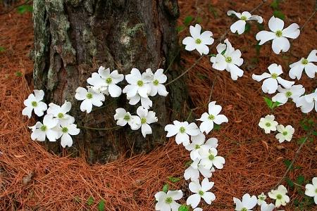 - Springtime Blossoms -