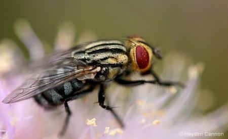 An eye for pollen