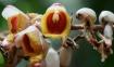 Dead Orchids