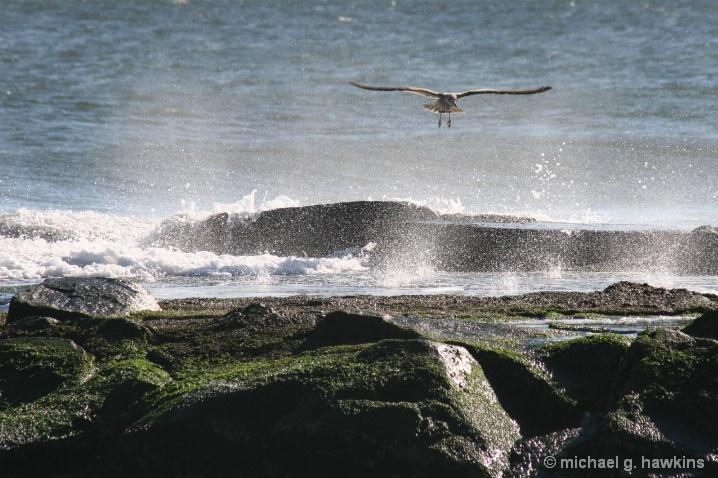 misty gull - ID: 5813638 © michael g. hawkins