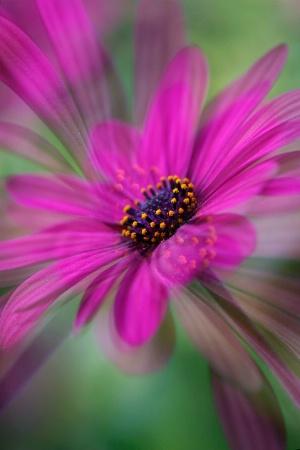 A twirl of Petals