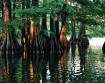 Cypress Reflectio...