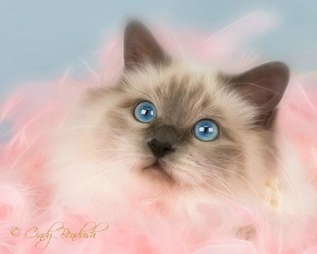 Pink Me!