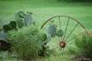 Cactus Wheel