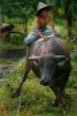 Racing Bull.....